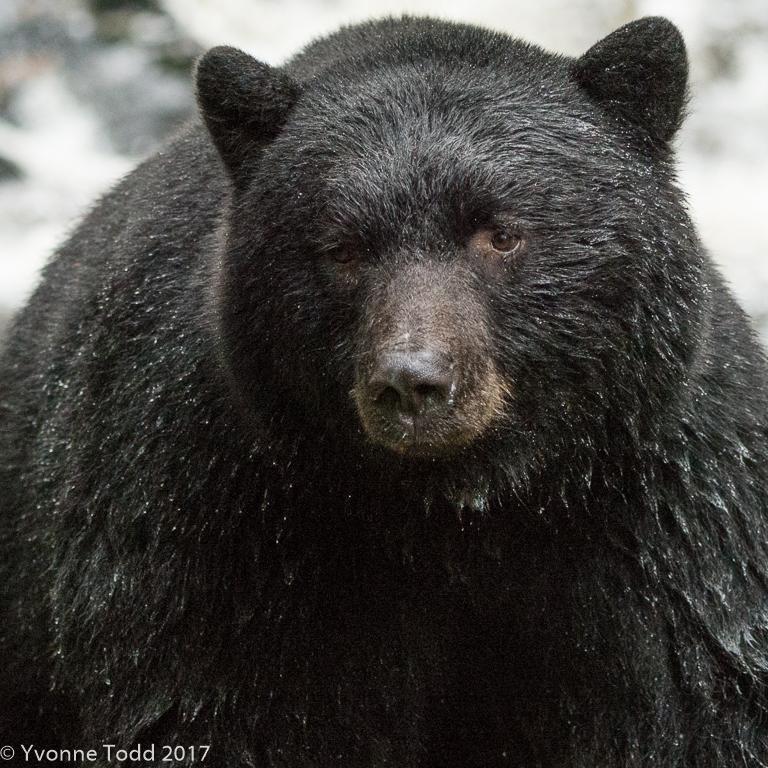 Spirit Bears-327.jpg