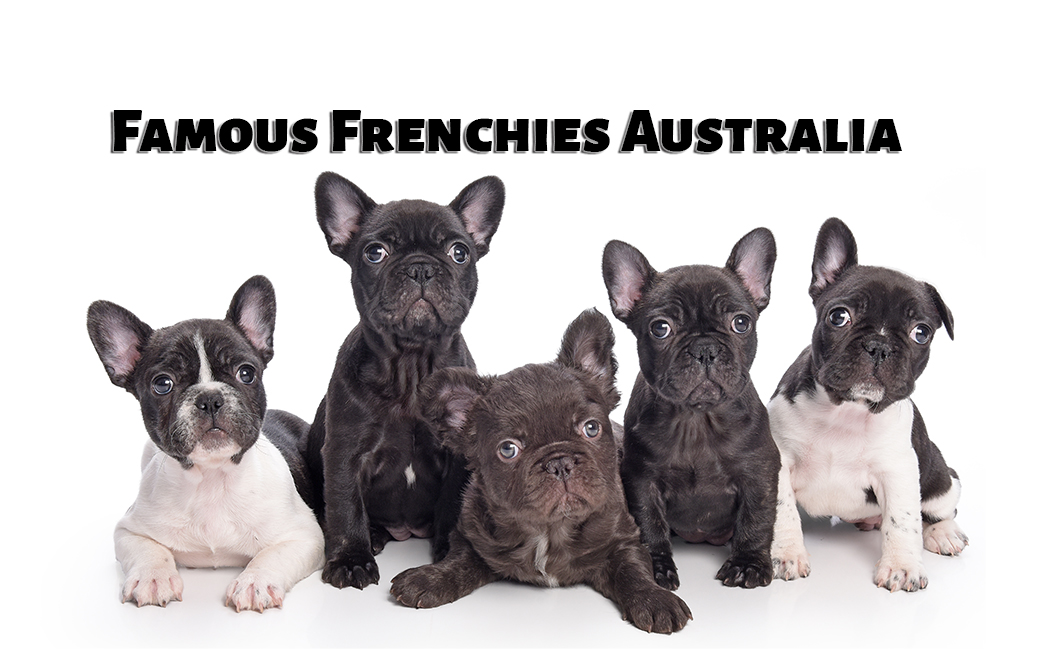 Famous Frenchies Australia