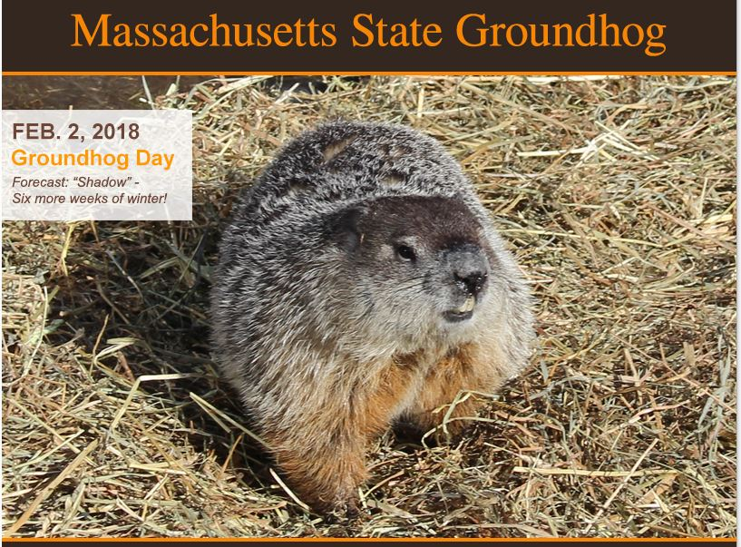 Punxsutawney Phil saw his shadow this year which says we are going to have 6 more weeks of winter!  http://www.mastategroundhog.com/   It derives from the  Pennsylvania Dutch  superstition that if a  groundhog  ( Deitsch :  Grundsau ,  Grunddax ,  Dax ) emerging from its burrow on this day sees a shadow due to clear weather, it will retreat to its den and  winter  will persist for six more weeks, and if he does not, due to cloudiness,  spring season  will arrive early.  https://en.wikipedia.org/wiki/Groundhog_Day