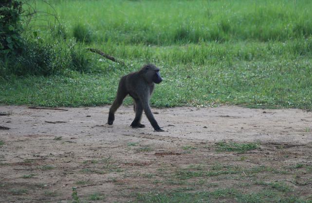 malayaka_house_safari_gallery_4.png