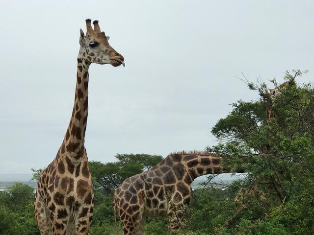 malayaka_house_safari_gallery_19.png