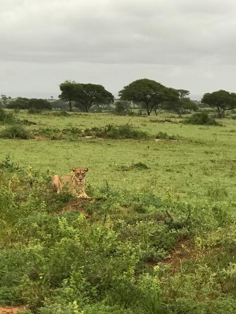 malayaka_house_safari_gallery_25.png
