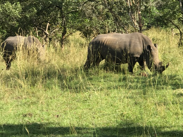 malayaka_house_safari_gallery_24.png