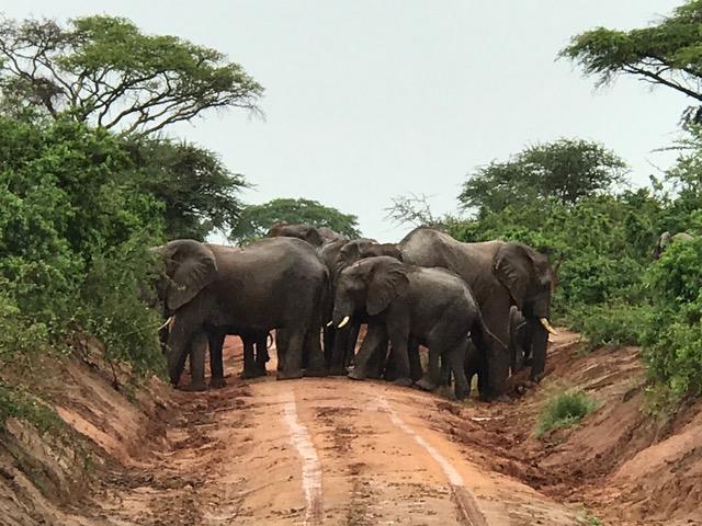malayaka_house_safari_gallery_27.png