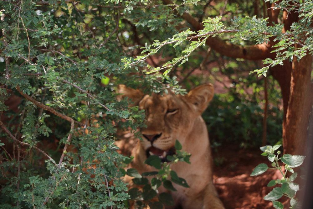 malayaka_house_safari_galleries_5.jpg