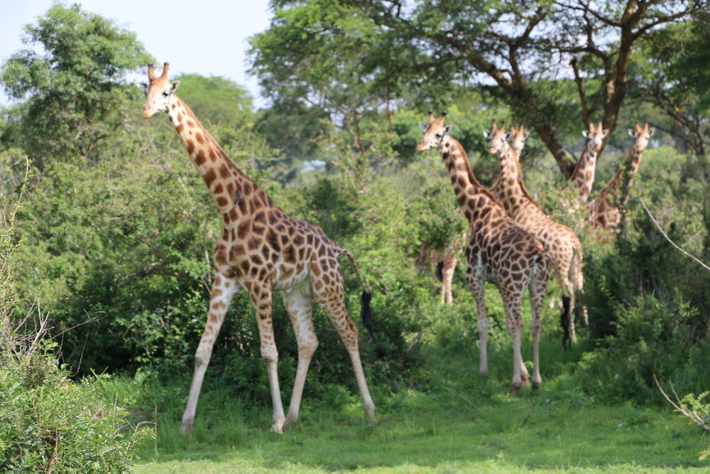 malayaka_house_safari_galleries_6.jpg