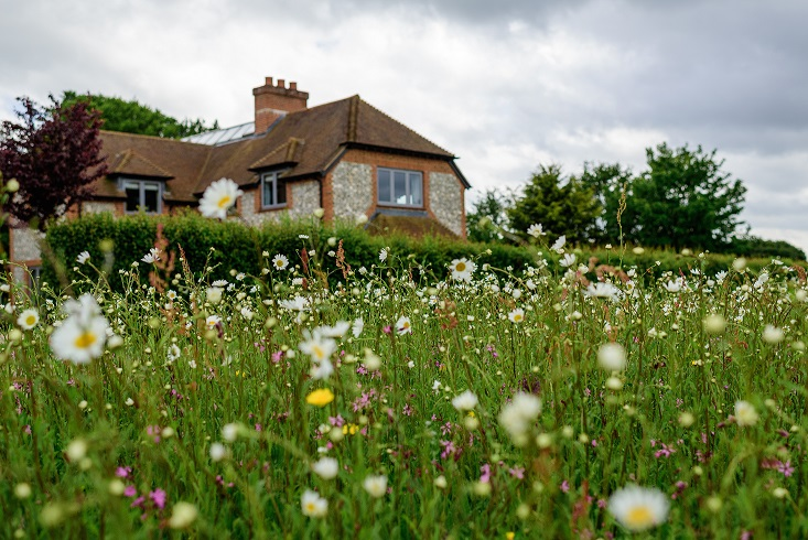 Wild Flower Turf Company - Kingsdown resized.jpg