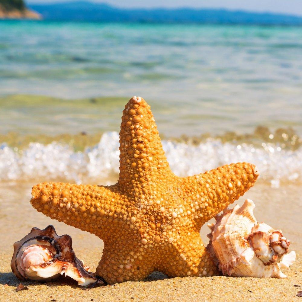 HC Travel starfish.jpg