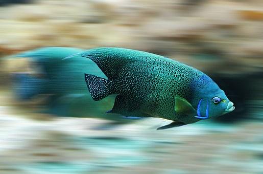 fish-582695__340.jpg