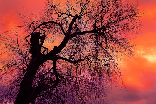 tree-3105390__340.jpg