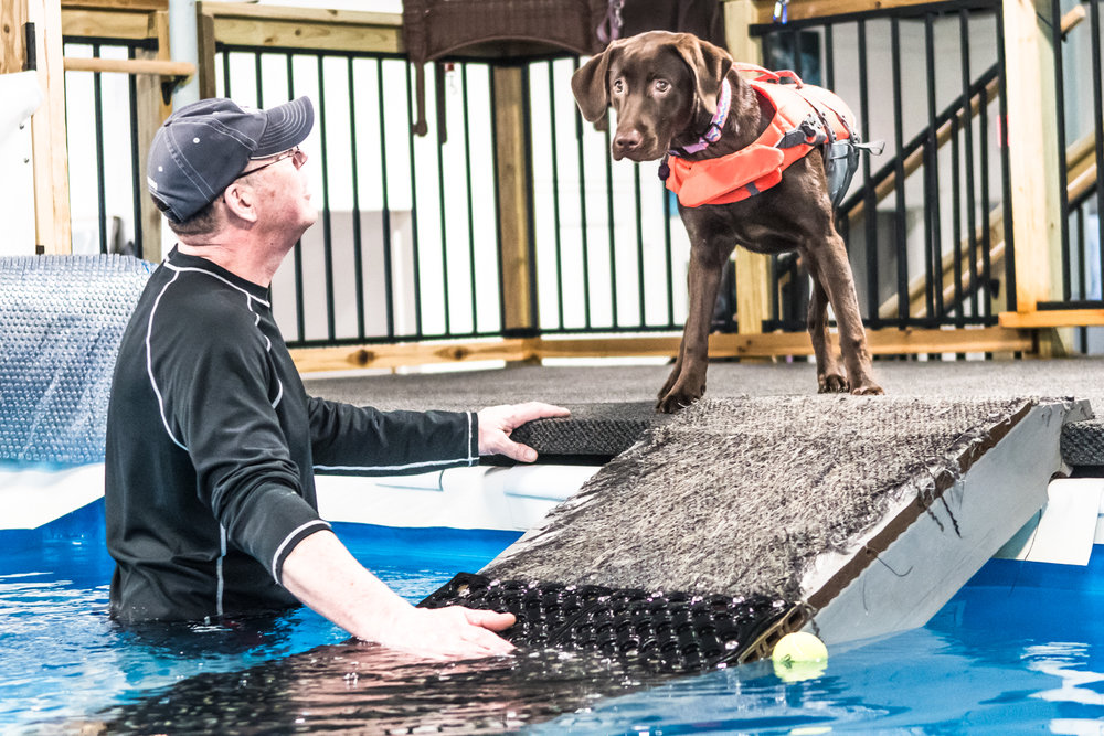 Owner of Club Aqua Paws, Mike Iwon, Racine, attempts to coax first time swimmer Tilly into the pool Thursday afternoon.