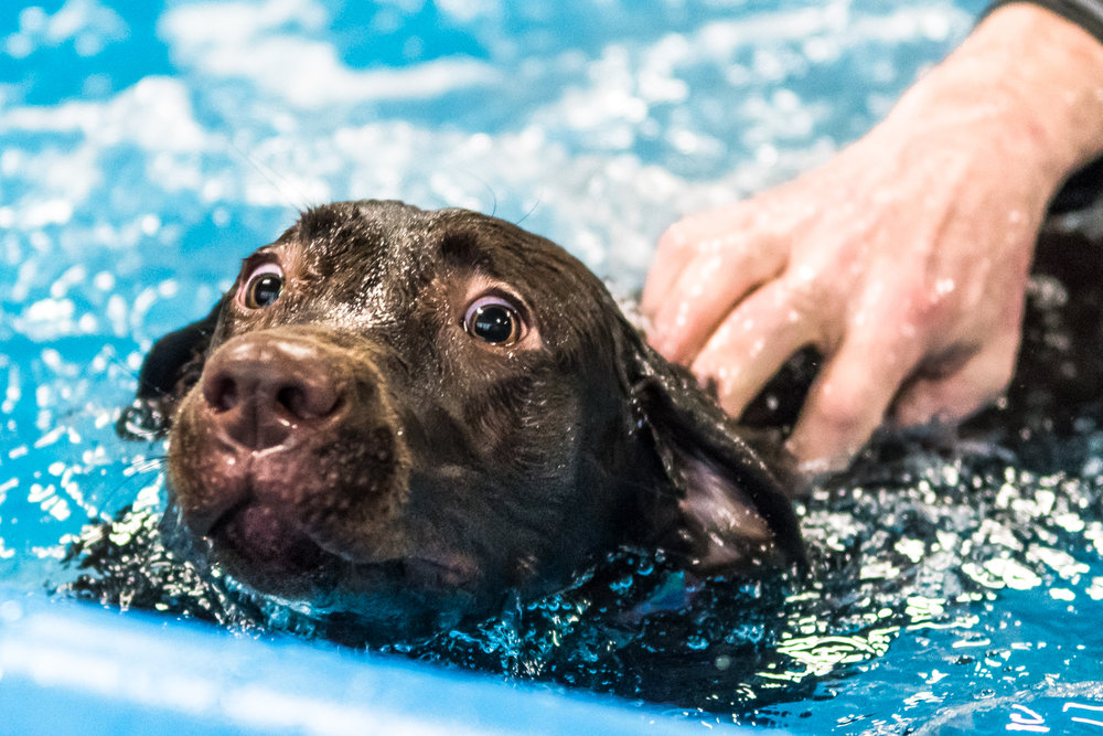 Swimming Dogs-20.jpg