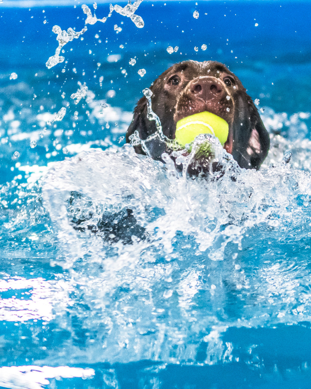 Swimming Dogs-19.jpg