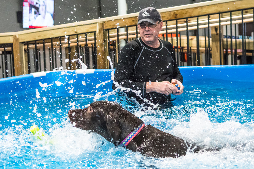 Swimming Dogs-21.jpg