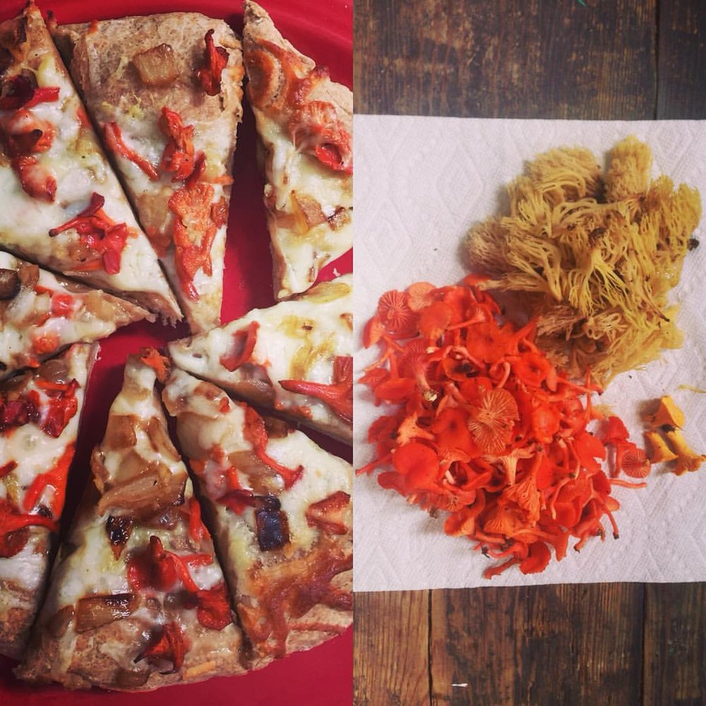 Cinnabar Chanterelles - Well as you can see, these are wonderful on pizza. Cinnabar Chanterelle mushrooms are petite mushrooms that have a peppery bite to them, making these mushrooms perfect for flavoring any meal as well as adding a pop of color.