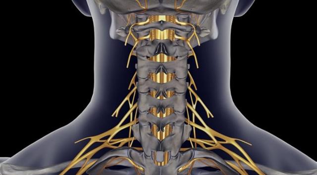 SCI MEDICAL BREAKTHROUGH: rewiring the nerves creates path