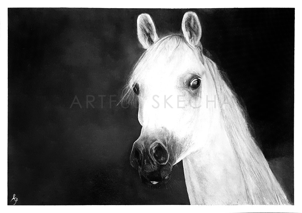 horse web.jpg