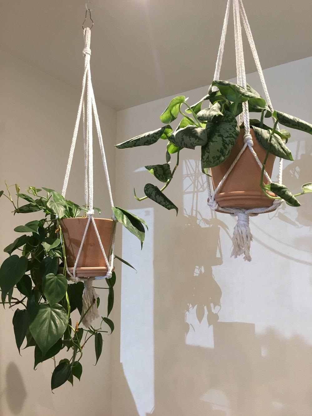 Plantes suspendues pour le décor d'un café montréalais