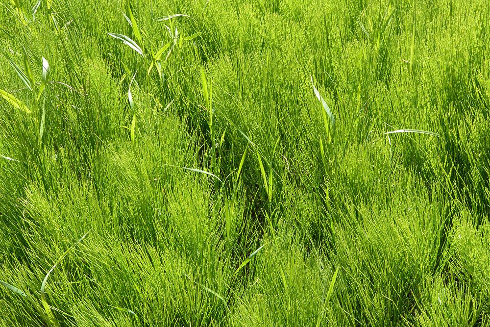 texture, green (channelling Ramsel Adams)