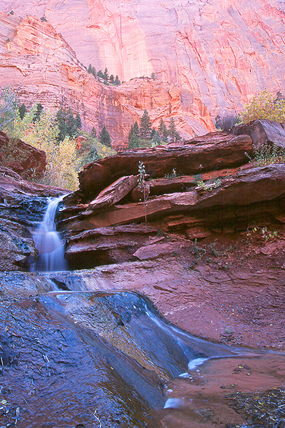 #9816 Waterfall Taylor Creek - The BEST! (Zion)