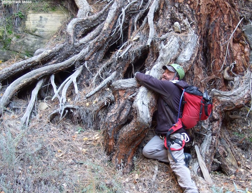 Cabot is not known as much of a tree-hugger, so photographic proof was called for. OK, root-hugger, perhaps. (Mystery Canyon)