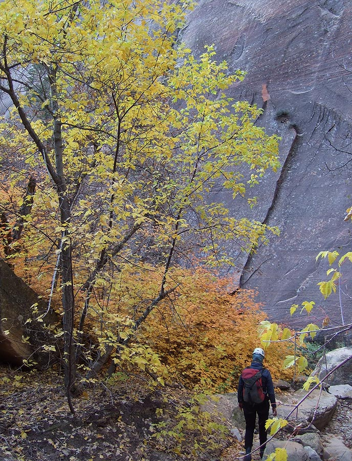 More delightful fall foliage colors. (Mystery Canyon)