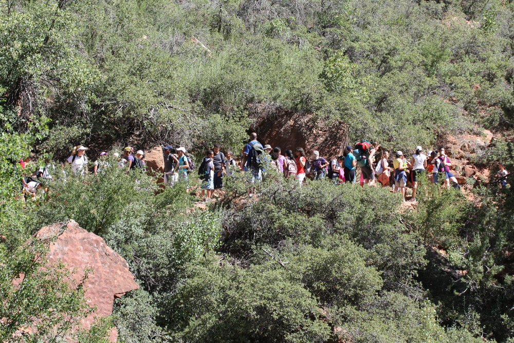 A bit of a mob scene - It's not just the technical canyons that get crowded - many hikes in popular destinations like Zion National Park become clogged with people during tourist season.