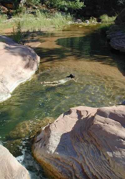 A swim