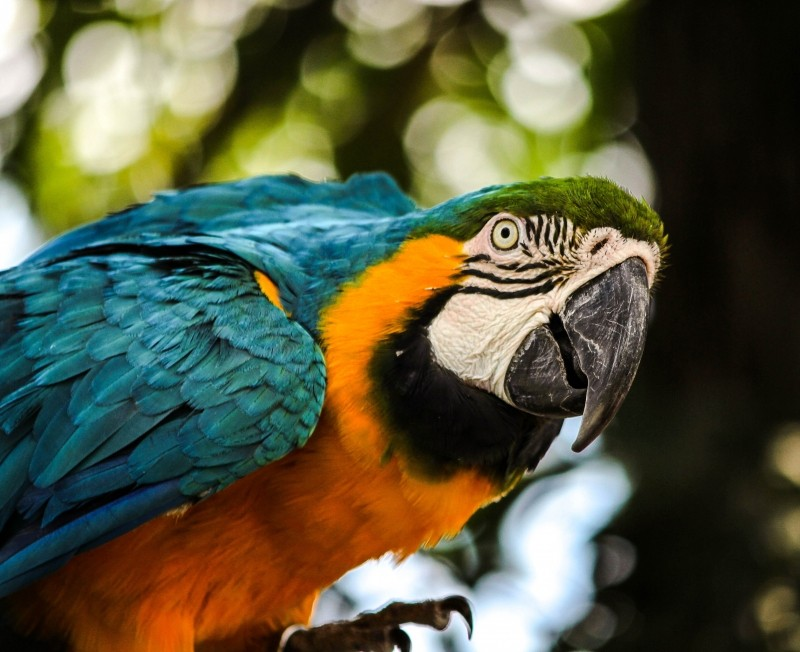 macaw-blue-gold-macaw-bird-tropical-bird-parrot.jpg