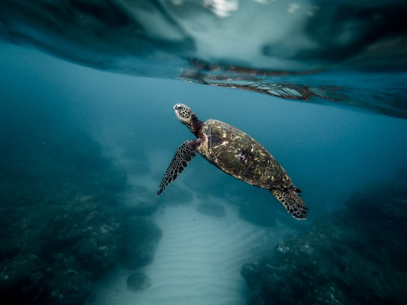 sea-turtle-ocean-turtle.jpg