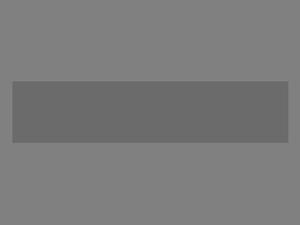 Conifer.png