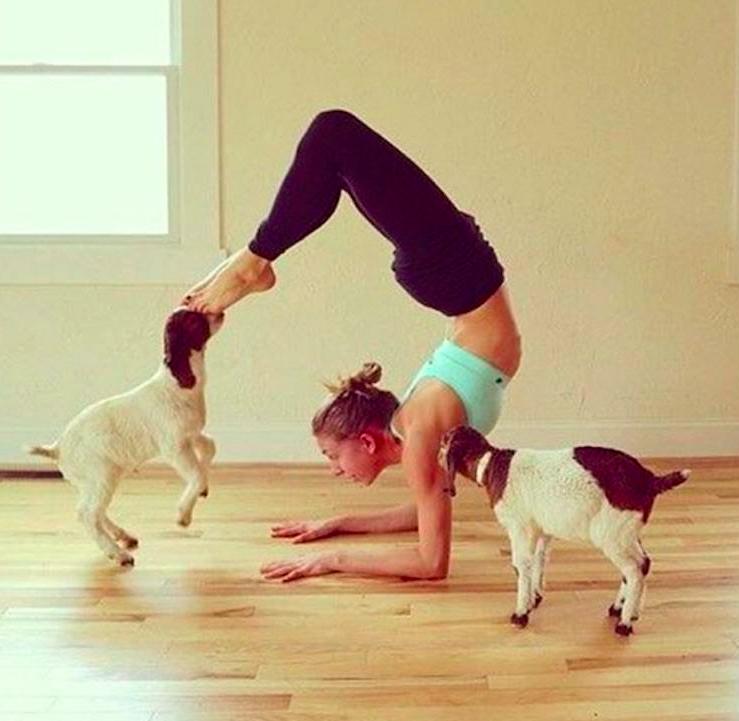 Goat_Yoga.png