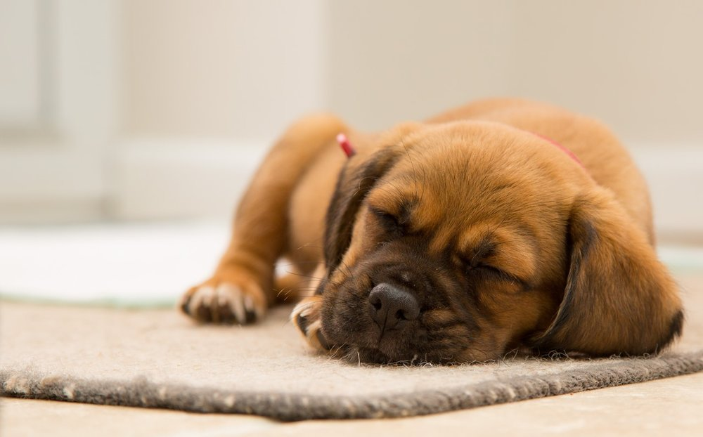 Like this cute dog, you too need to sleep.