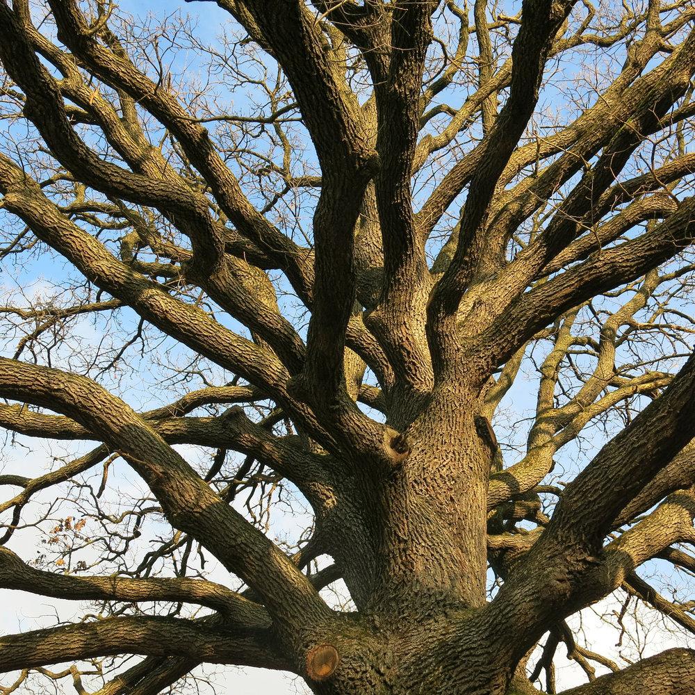 ancestral healing -