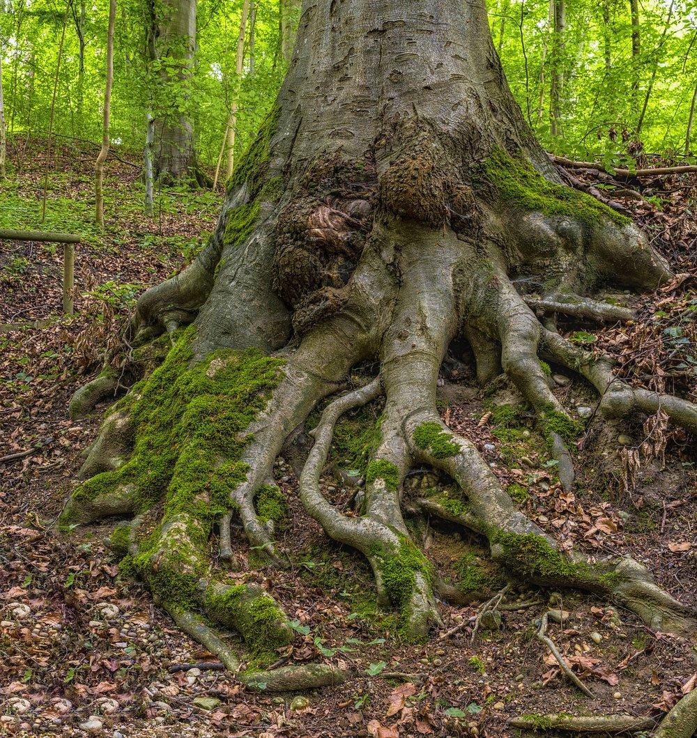 root-2515833_1280.jpg