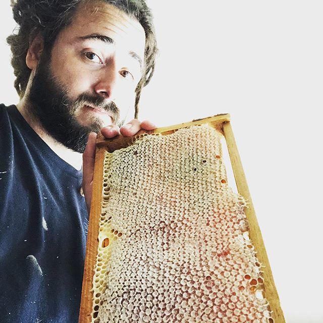 Honey harvest time. #backyardvibes #bushmanhoney