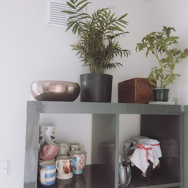 These @ikeauk Kallax / Expedit units are brilliant for temporary kinda living. This block is in the kitchen and contains so much. The metal bowl on top is a glorified junk drawer, the plants are great for adding a bit of great feng shui energy to the stagnant corner, that wooden box contains treat bags for @vizslaapollo and just below in the square is my latest batch of kombucha ✨🙏🏻 the vents above have been closed up, mainly because when I opened them, a handful of false widow spiders crawled out 😫 #houserenovation #victorianrenovation #renovationessentials #simpleliving