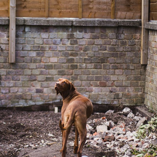 "A whole lot of sacrifices have had to be made during the design and groundwork construction phases - but that's the basis for any good relationship right?! Compromise ☺️ except, well, @vizslaapollo isn't at all happy with us having compromised his favourite ""pee tree"" 😕 ermm... sorry Apollo..."