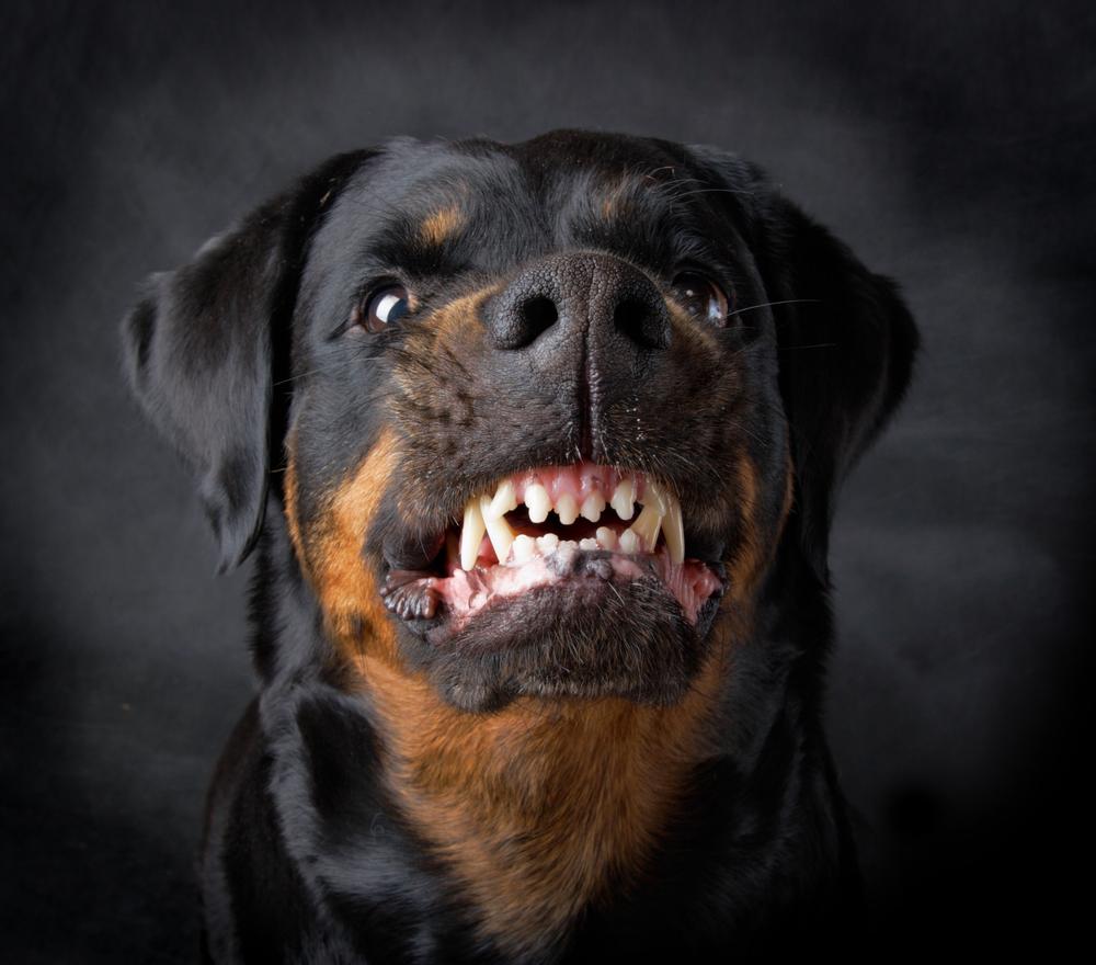 Dog-Bites.jpg