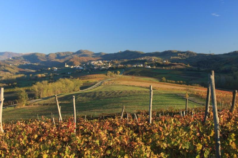 valliunite-vigne-paesaggio.jpg