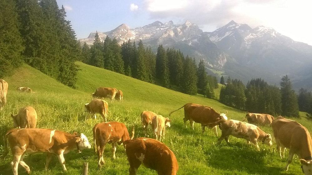 10-26-17 Alp1.jpg