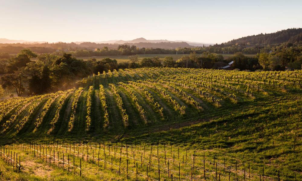 Quivira-wines-1Vineyard.jpg