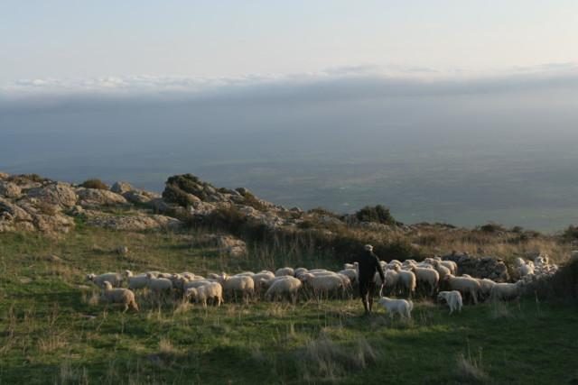 pecore-nuoro-e1367624318875.jpg