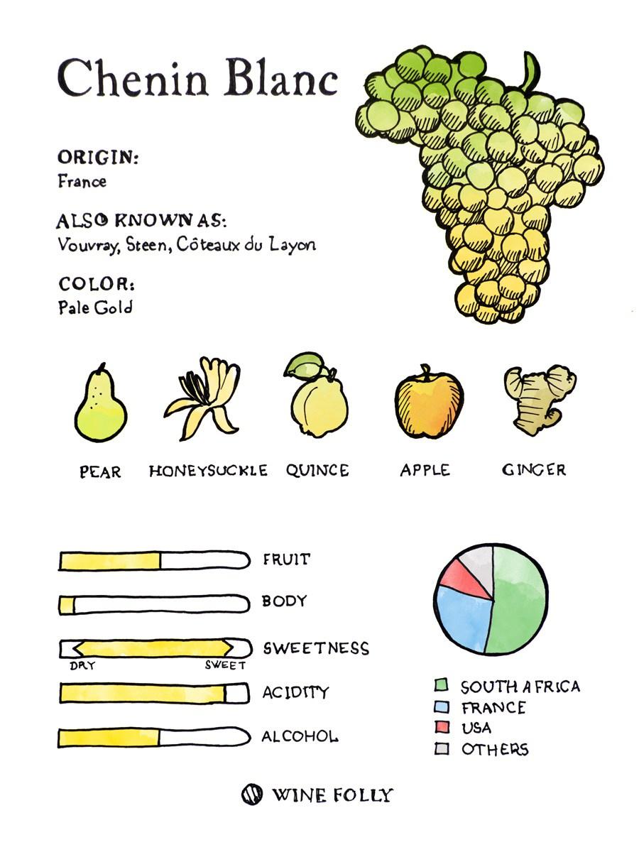Chenin-Blanc-Illustration-tasting-profile-winefolly.jpg