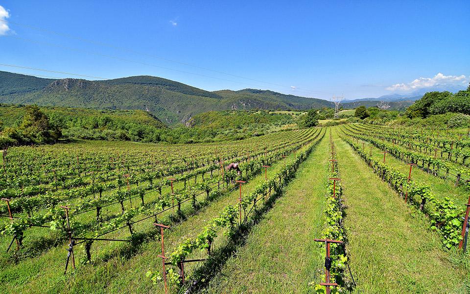 Glinavos vineyards.  Photo Credit