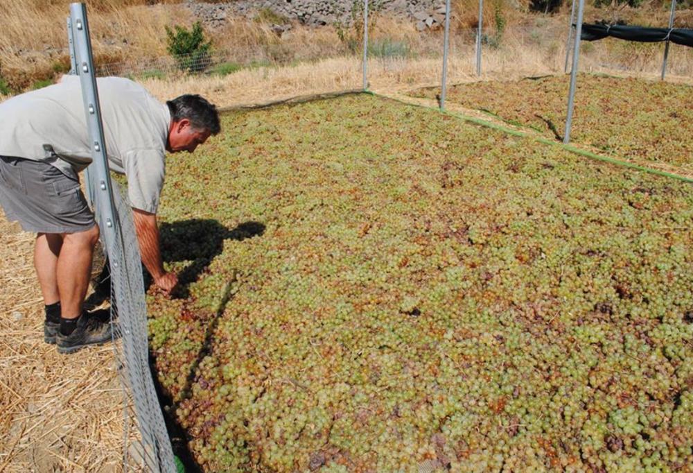 Garalis grapes.  Photo Credit