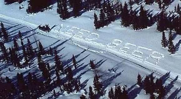 need-beer-in-snow1.jpg