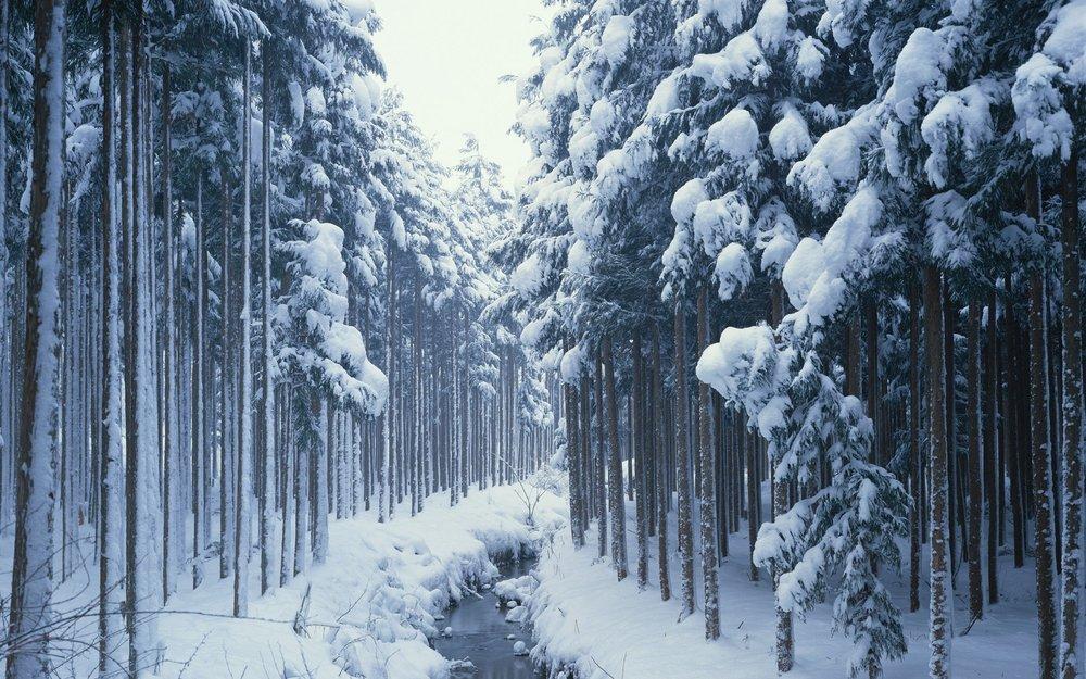 snow-forest-wallpaper-11484119.jpg
