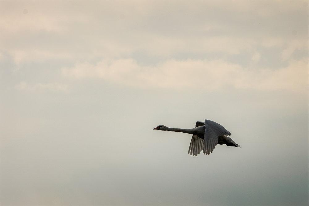 păsările nu întârzie să apară