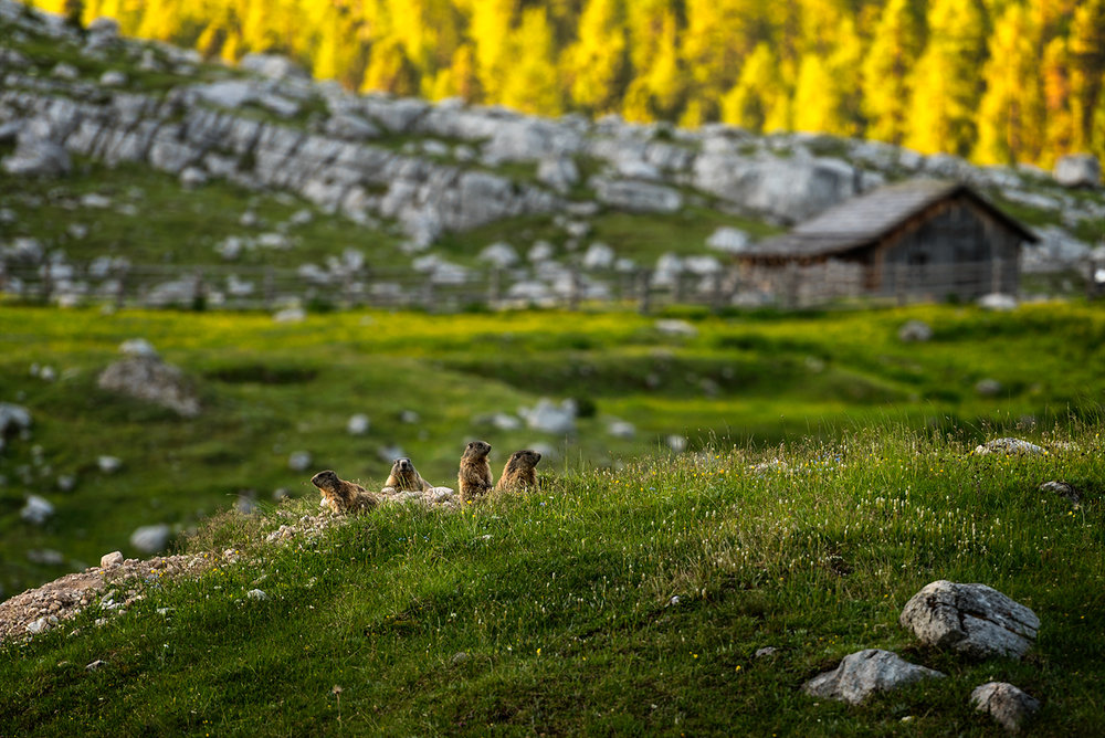 06 - 26 Dolomiti-427 copy_small.jpg
